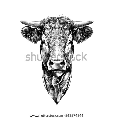 how to draw a cow head