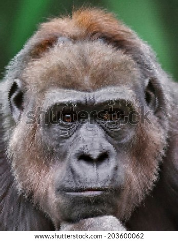 Face portrait of a gorilla female close up. Human like expression of the great ape, anthropomorphic monkey, the biggest primate of the world. Amazing scaly detailed vector image with high resolution.