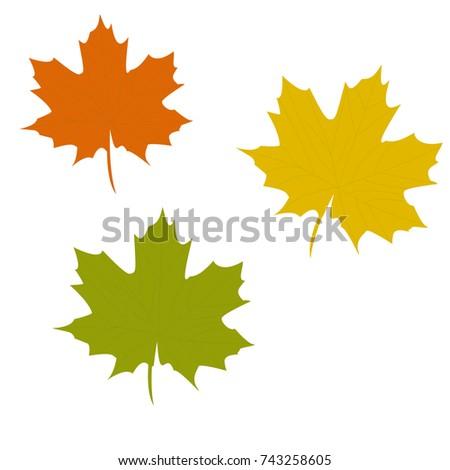 fall leaves vector set autumn season stock vector 743258605 rh shutterstock com fall leaves vector free fall leaves vector background