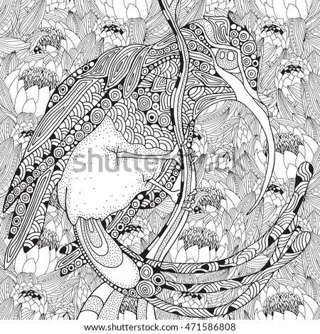 Fantastical Bird Coloring Book Amazing Sunbird With Protea Flower And Patterns Black White