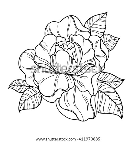 Thing moreover Fashion Illustration Pencil further Willow Tree Tattoo additionally 40907 besides Fantasy Peony Flower Vector Floral Artwork 411970885. on japanese fashion