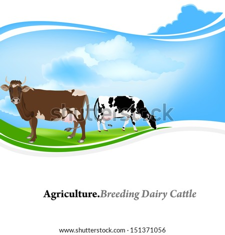 Farm animal,Agriculture.Breeding dairy Cattle.Vector background - stock vector