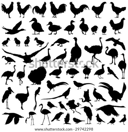 farm birds silhouettes big vector collection - stock vector