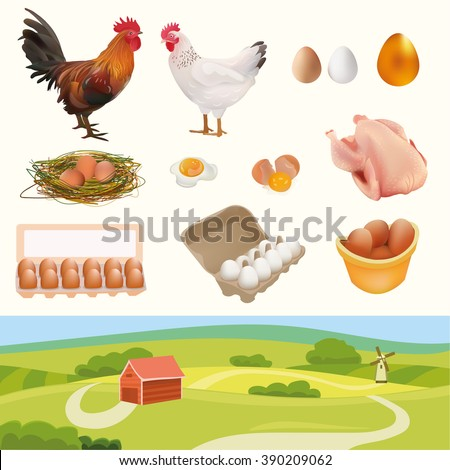 Farm Set with Rooster, Hen, Chicken, Nest, White, Orange, Golden Eggs, Broken Egg, Omelette, and Landscape. Isolated On White Background Vector Illustration. Feather Products - stock vector