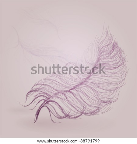 Feather background - stock vector