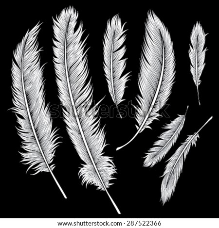 Feather Hand Drawn Background, Vector EPS10 - stock vector