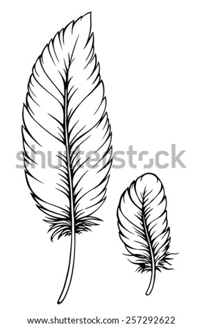feather isolated - stock vector