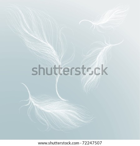 Feather on the sky - stock vector