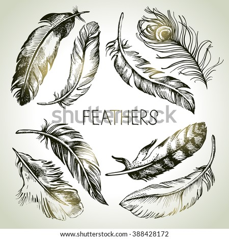 Feather sketch set. Hand drawn vector illustrations  - stock vector