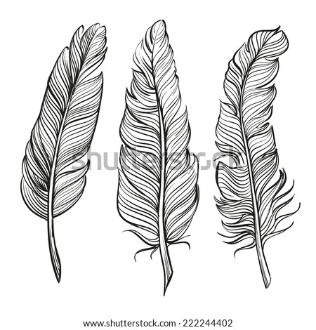 feathers set hand drawn vector llustration realistic sketch - stock vector