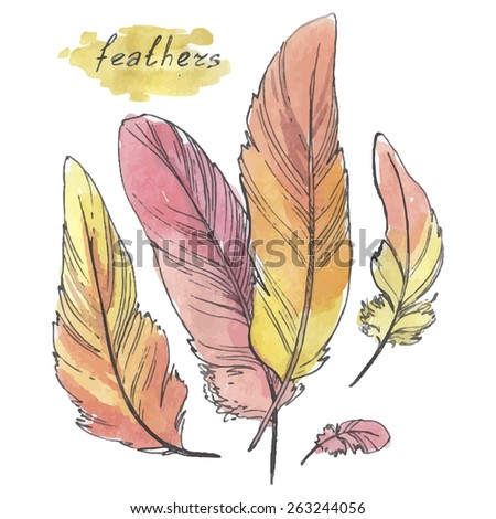 Feathers, watercolor illustration on a white background. - stock vector