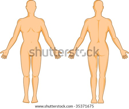 female human anatomy standing front ans back isolated on white - stock vector