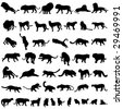 Ferocious and beautiful cats - stock vector