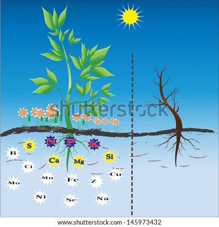 Fertilizers / nutrients needed for plants. Background  - stock vector
