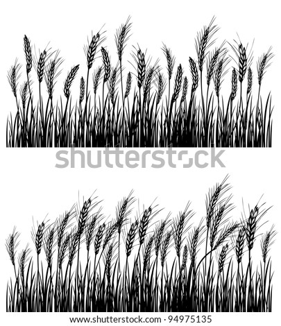 Field of wheat on white - stock vector