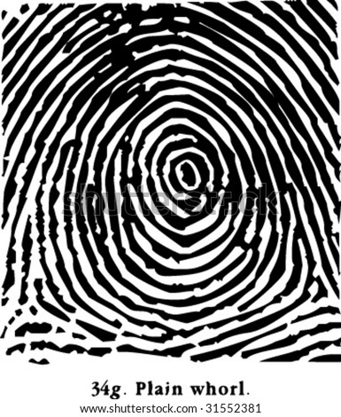 fingerprint plain Whorl - stock vector