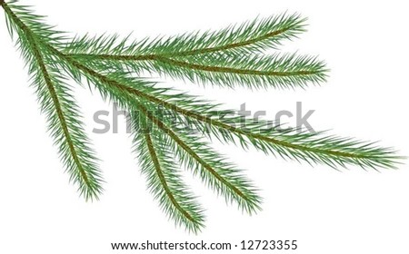 Fir twig isolated on white (vector illustration)