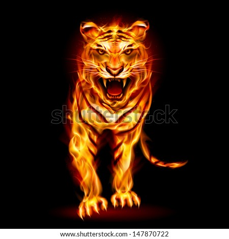 Fire tiger. Illustration on black background for design - stock vector