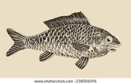 Fish (Bream) vintage engraved vector illustration, hand drawn - stock vector