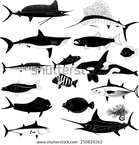 Fish collection vector illustration - stock vector
