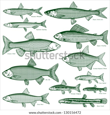 Fish silhouette stock images royalty free images for Fische arten