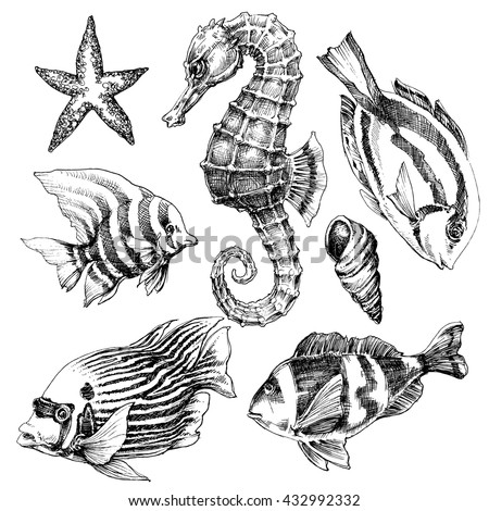 Fish, sea horse, marine life hand drawn set. Sea life vector sketch - stock vector