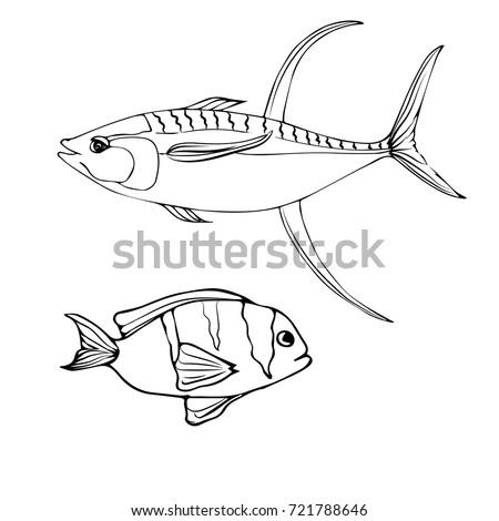 Xray Fish Coloring Page