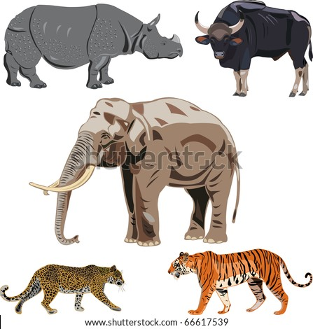 Five big wild beasts in India.