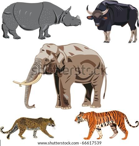 Five big wild beasts in India. - stock vector