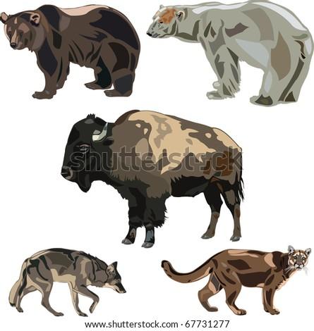Five big wild beasts in North America. - stock vector