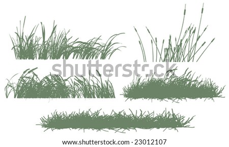five grass silhouettes - stock vector