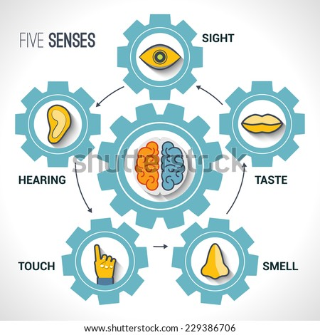 Five senses concept with human organs icons and brain in cogwheels vector illustration. - stock vector