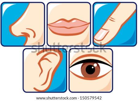 Five Senses Stock Images, Royalty-Free Images & Vectors | Shutterstock