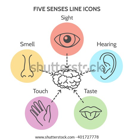 Five senses line icons human ear stock vector 401727778 for 5 senses in architecture
