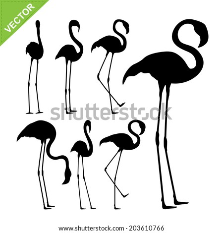 Flamingo bird silhouettes vector - stock vector