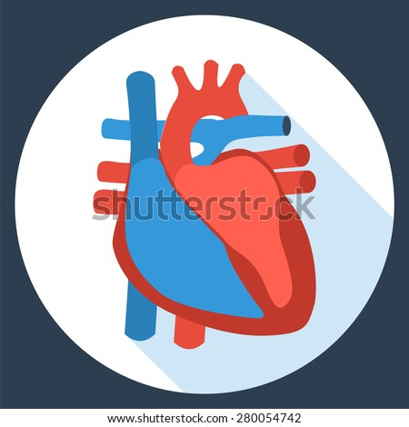 Flat design icon of anatomy of human heart. Vector illustration. Health care and medical care symbol. - stock vector