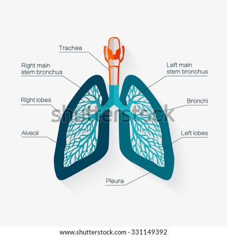 Flat Design Icon Human Lungs Diagram Stock Photo Photo Vector