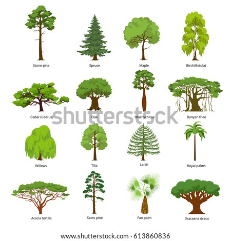Tree vector on growing chestnut trees