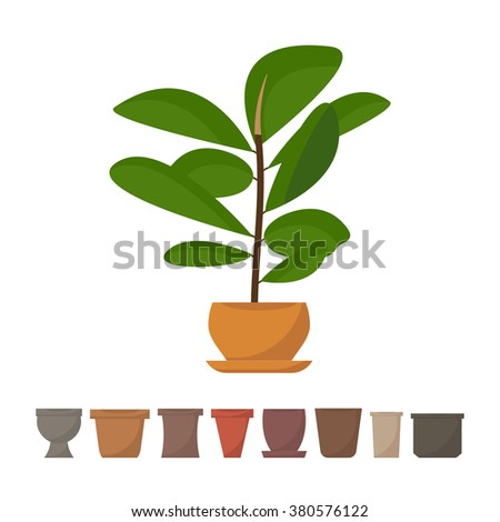 Flat style houseplant in pot vector icon. Ficus tree. Green indoor leafy vector houseplant with different pots icons. Houseplant isolated on white background. Set of pots icons. - stock vector