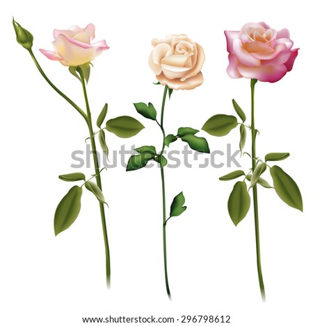 Floral background. A set of three garden roses. Fully editable vector. - stock vector