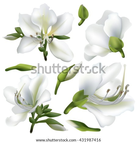 Floral background. Set of spring flowers for design purposes. Fully editable vector