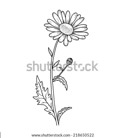 Floral beautiful card. Vector Background. Flower isolated on white.