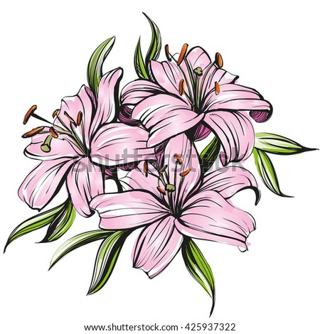 floral blooming lilies  vector illustration hand drawn painted watercolor   sketch