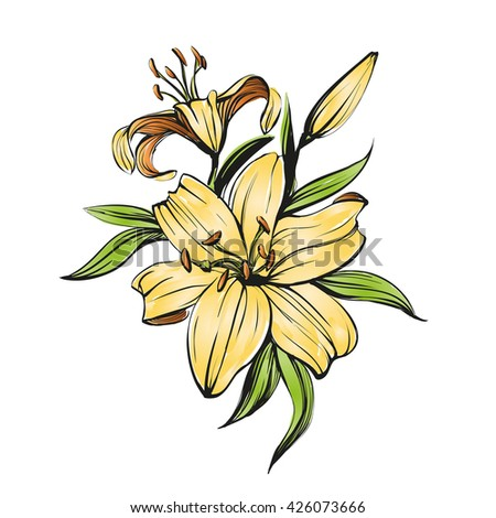 floral blooming lilies vector illustration hand drawn painted watercolor sketch - stock vector