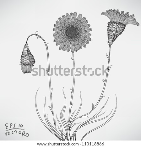 Floral Elements for design, EPS10 Vector background - stock vector