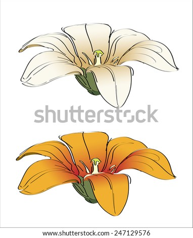 floral lily vintage drawing vector illustration isolated - stock vector