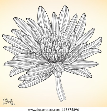 Floral, Lotus, Water Lily Elements for design, EPS10 Vector background - stock vector