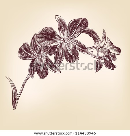floral orchid vintage drawing vector illustration  isolated - stock vector