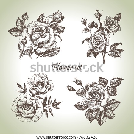 Floral set. Hand drawn illustrations of roses - stock vector