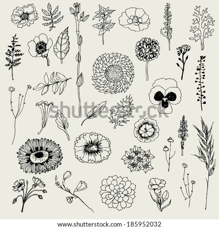 Floral set. Vector hand drawn illustration. - stock vector